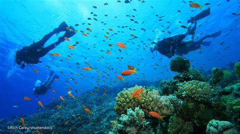 dive phuket 1st time diving in phuket scuba diving in phuket for
