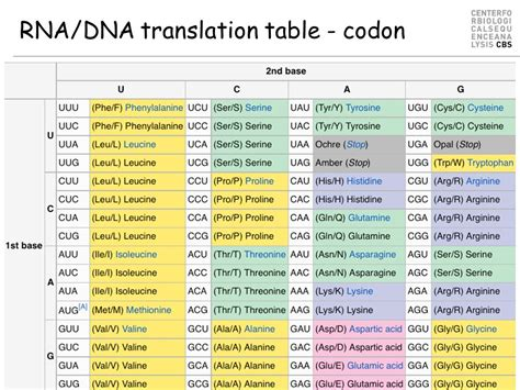 amino acid codon table outline what is an amino acid protein ppt