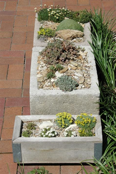 miniature rock garden miniature rock garden farm news and miniature conifers