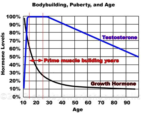 Muscle Growth Chart
