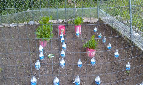 Keeping Rabbits Out Of Garden by Vegetable Garden Tips And Tricks Redlipstickreviews