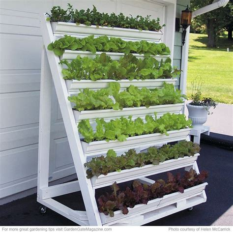 Lettuce Planter by 17 Best Ideas About Vertical Planter On