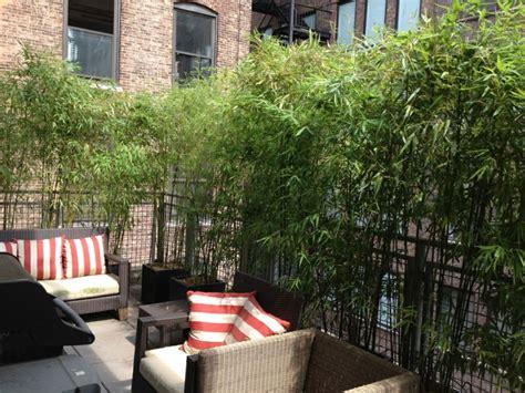 terraza  ideas increibles  decorarla  plantas
