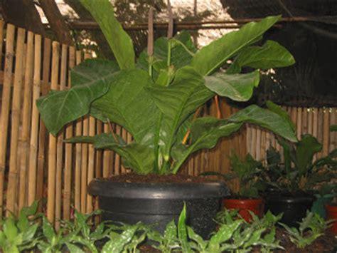 segala jenis tanaman jenis tanaman hias