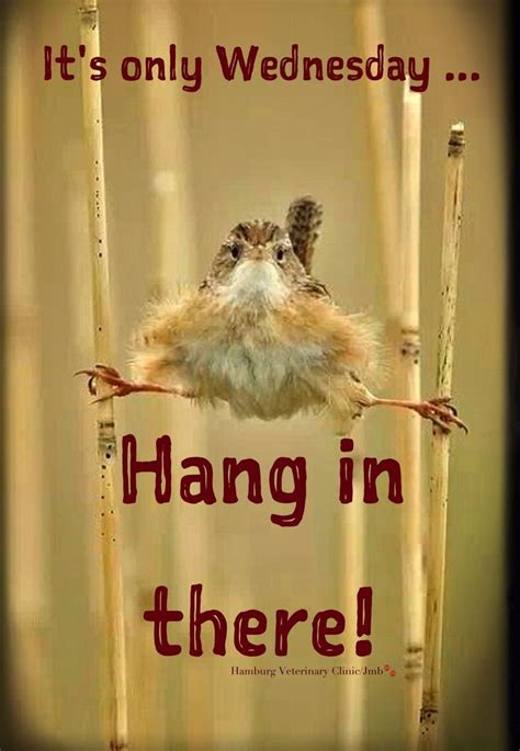 funny animal wednesday quotes quotesgram