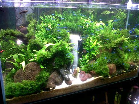 cara mudah membuat aquarium berikut design filter airnya hobi baru saya aquascape pojoknya totok
