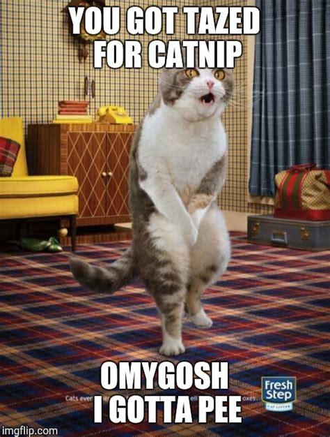 Pee Meme - gotta go cat meme imgflip
