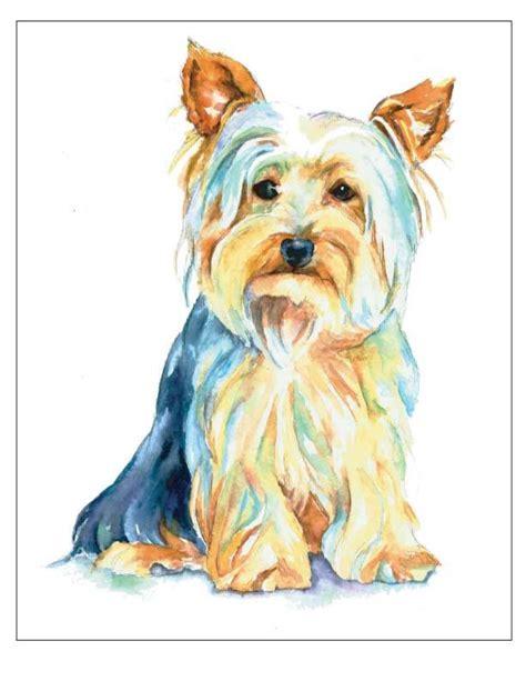 yorkie items 100 best australian silky terrier images on yorkie yorkies and