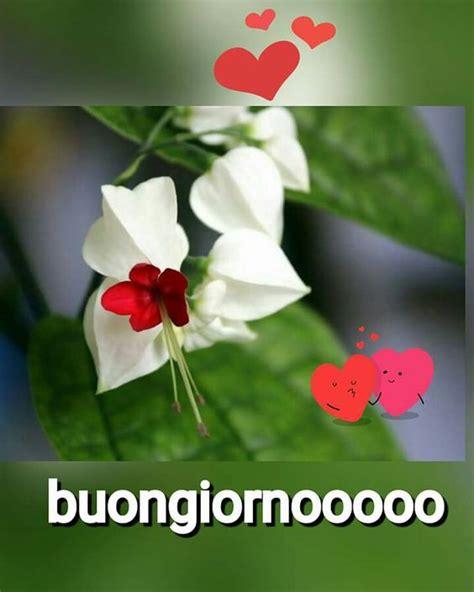foto bellissime fiori buongiorno con fiori e cuori immagini