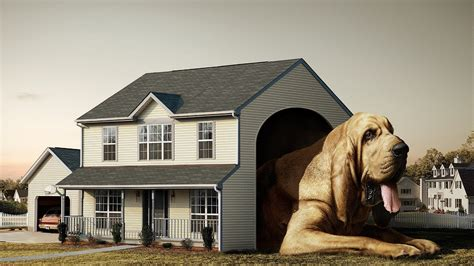 dog house wallpaper funny wallpaper of dog house new hd wallpapernew hd