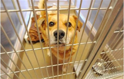 humane society for dogs photos humane society animals