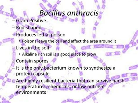 rich soil powerpoint template backgrounds id 0000007139 ppt anthrax bacillus anthracis powerpoint
