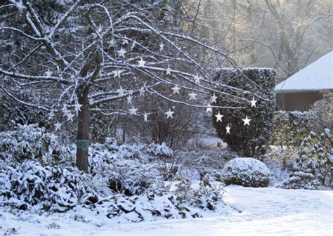 Winter Garden by Gardening How To Bring Out The Magic Of Winter Gardens Hstead Highgate And Camden