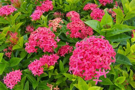 Lu Hias Biasa 21 bunga nan indah dan menakjubkan terselubung in