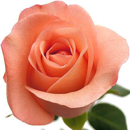imagenes de flores otoñales enviar rosas rosas enviar rosas a domicilio