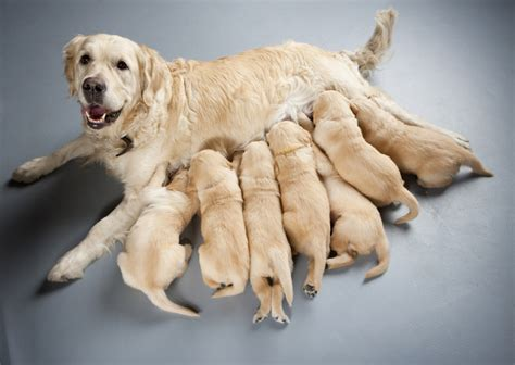 when can puppies be weaned how to wean your puppy