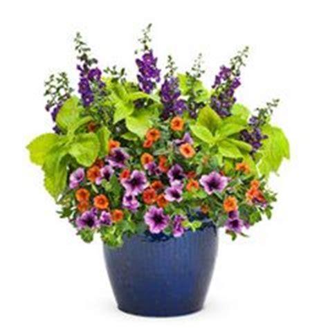 color wheel garden planning on pinterest color wheels color schemes and petunias
