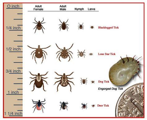 backyard tick treatment tick flea mosquito control lawn envy