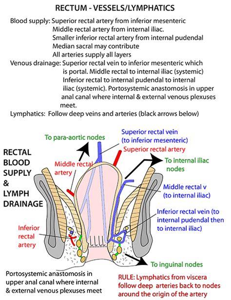 rectum and diagram instant anatomy abdomen vessels veins rectal