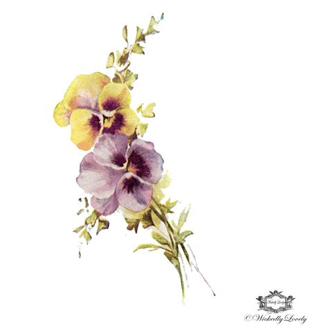 pansy tattoo pansies vintage pansies temporary floral
