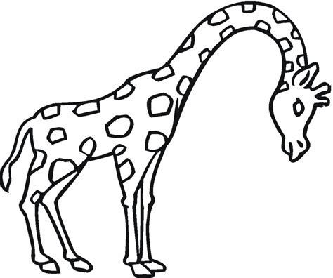 imagenes de animales salvajes para dibujar maestra de infantil animales salvajes para colorear