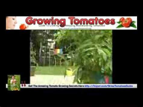 vegetables 2014 summary a summary of entrepreneurship grow organic vegetables