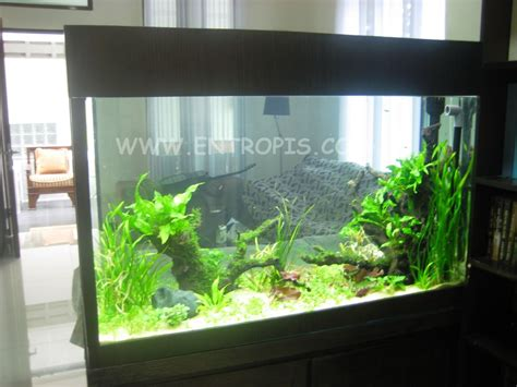 design aquascape murah our design track record blog akvodecor com