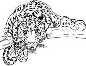 desenhos de leopardos para imprimir e colorir animais