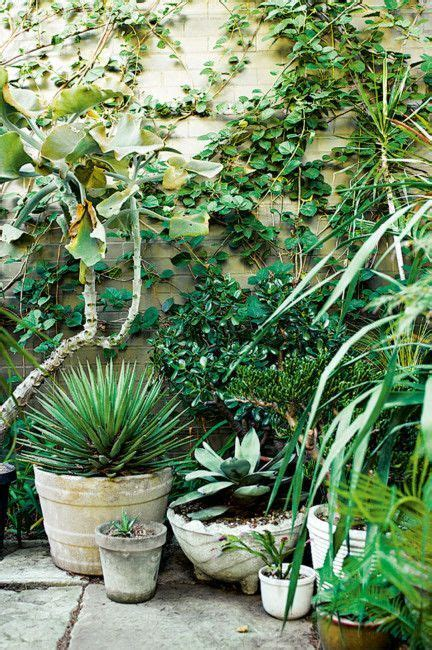 small pot plants 1000 ideas about small courtyards on small