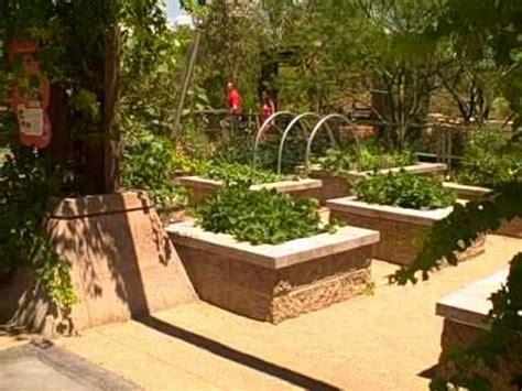 nevada backyard las vegas summer vegetable garden how to grow food in