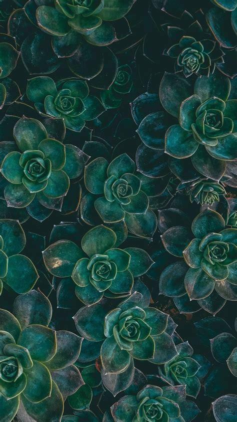 wallpapers  celular  te conectaran  la naturaleza