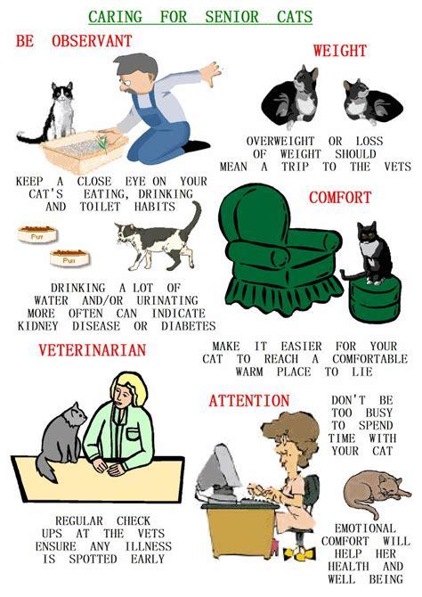 Cat Posters   PoC