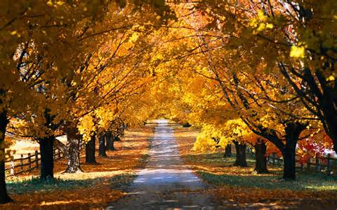 country road in the fall wallpaper 11542