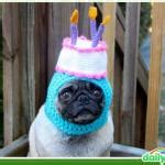 Pug Birthday Meme - image gallery happy birthday pug meme