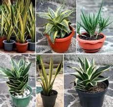 teks prosedur membuat tanaman hias tips membuat tanaman hias rumahan agar tetap segar