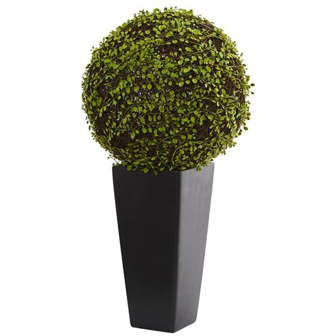 nearly mohlenbechia artificial plant in black