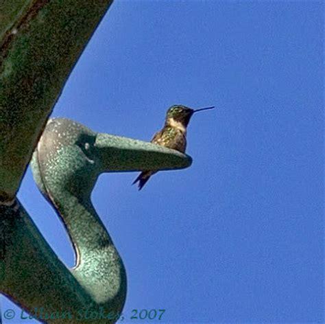 stokes birding blog july 2007