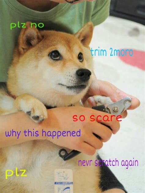no trimming plz doge know your meme
