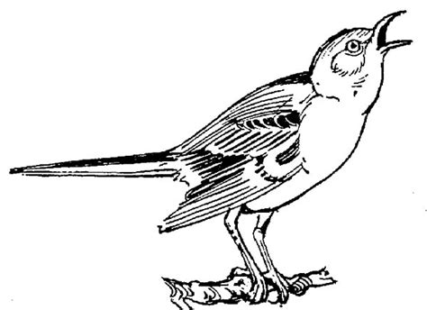 mockingbird coloring pages mockingbird coloring download mockingbird coloring
