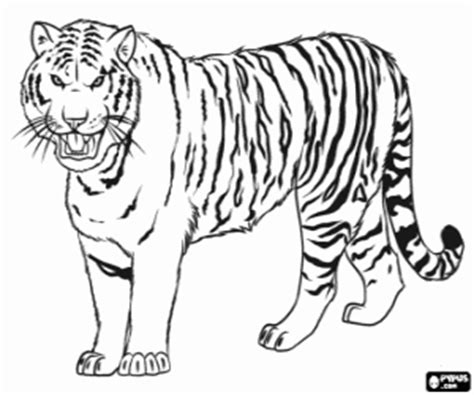 coloring pages siberian tiger felines coloring pages printable games