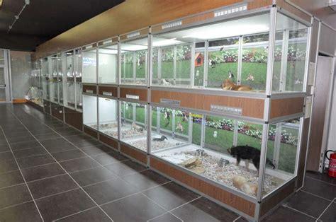 negozio animali roma negozio animali fiumicino vendita acquari fiumicino