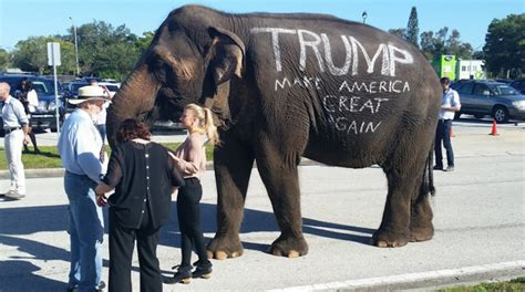 donald trump elephant donald trump rally features circus elephant owned by man