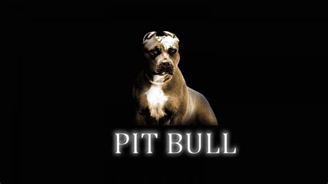 Best Pit Pitbull Wallpapers Wallpaper Cave