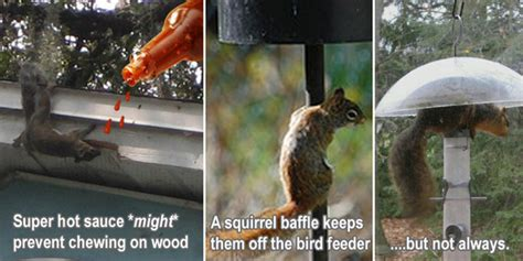 how to keep away squirrels from the yard garden