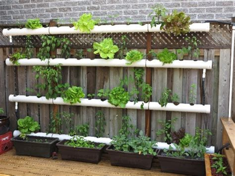 cool pvc pipe planters   beautify  garden