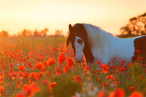 imagenes lindas de cumpleaños 10 fotos de cavalo mais lindas que voc 234 viu e como foram