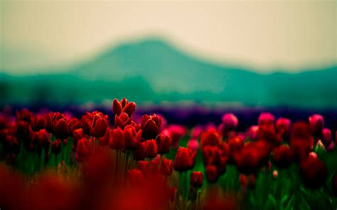 wallpaper tumblr red 20 tumblr flower backgrounds wallpapers freecreatives