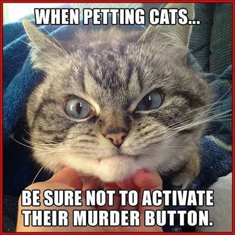 Funny Memes About Cats - 20 funny animal jokes and memes quotes and humor