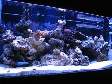 marine aquascaping techniques marine aquascaping techniques marine aquascaping