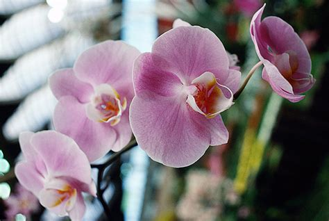 how to care for orchids and help them bloom new england